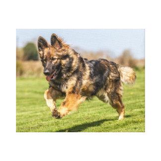 幸せなキャンバスのジャーマン・シェパード犬のアルザス犬 キャンバスプリント