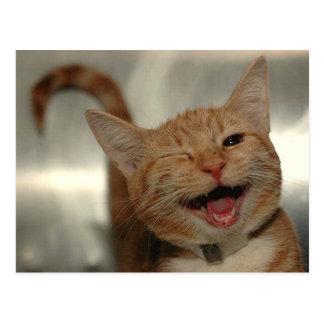 幸せなショウガ猫のまばたき ポストカード