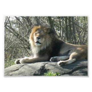 幸せなライオン フォトプリント