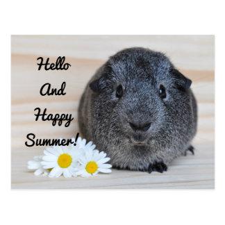 幸せな夏のモルモット 葉書き