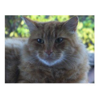幸せな猫の郵便はがき ポストカード