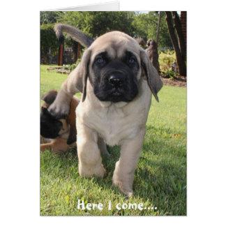 幸せなv日を望むために来ているマスティフの子犬 カード