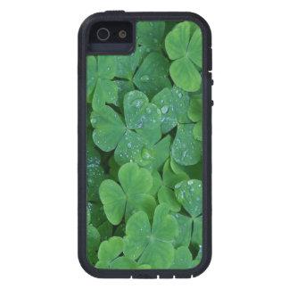 幸運なアイルランドのシャムロック iPhone SE/5/5s ケース