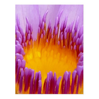 幸運な紫色のはすの花のスイレン ポストカード