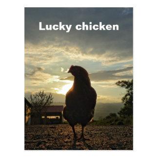 幸運な鶏01.T ポストカード