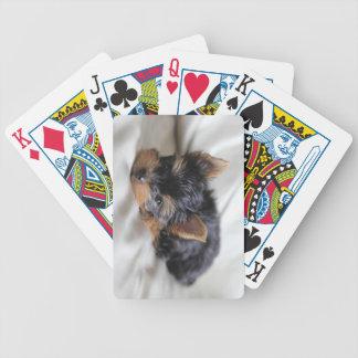 幸運カードを遊ぶ日本のなヨークシャーテリア バイスクルトランプ