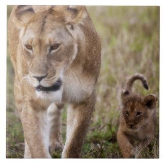 幼いこども(ヒョウ属レオ)を持つメスのライオンに見られるように タイル