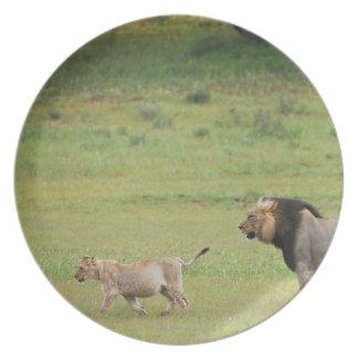 幼いこども、ヒョウ属レオ、Kgalagadiを持つオスのライオン プレート