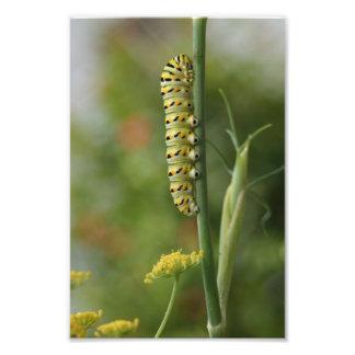 幼虫の写真撮影は自然の写真を閉めます フォトプリント