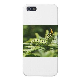 幼虫2012年 iPhone 5 COVER