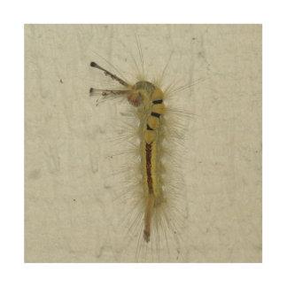 幼虫、木製の写真のプリント ウッドウォールアート