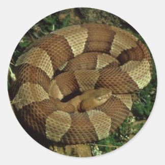 広バンドを付けられたcopperheadのヘビのステッカー ラウンドシール