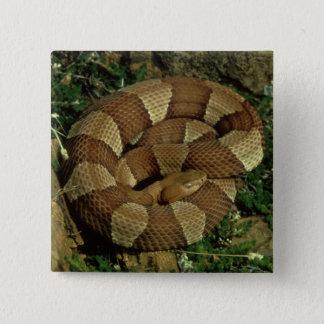 広バンドを付けられたcopperheadのヘビのpinbackボタン 5.1cm 正方形バッジ
