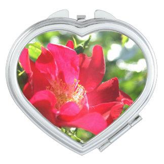 広島市東区の牛田にあるバラ園にて撮影した真っ赤な薔薇☆