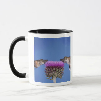 広後につかれたハチドリ、Selasphorus マグカップ