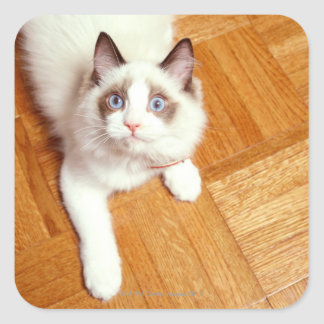 床、高い眺めのRagdoll猫 正方形シール