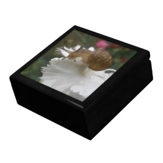 庭かたつむりおよび白いカーネーションのギフト用の箱 ギフトボックス