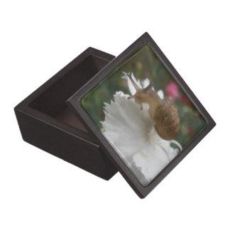 庭かたつむりおよび白いカーネーションの優れたギフト用の箱 ギフトボックス
