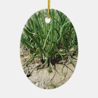 庭で育つ緑のニラネギの植物 セラミックオーナメント