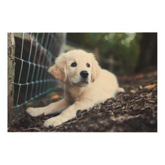 庭で遊んでいるラブラドールの子犬 ウッドウォールアート