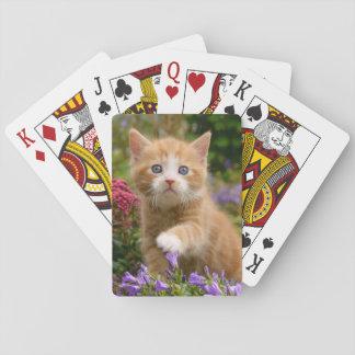 庭のかわいいショウガの子ネコ トランプ