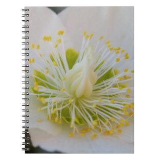 庭のサクラソウ ノートブック