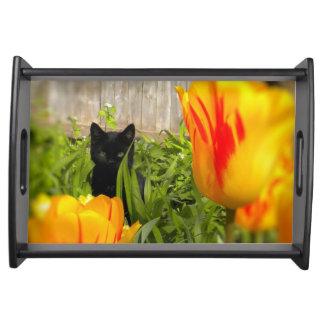 庭のサービングの皿の黒い子ネコ トレー