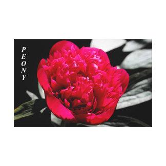 庭のシャクヤク-キャンバス キャンバスプリント