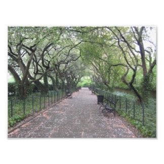 庭のセントラル・パーク保存性のNYCの写真撮影 フォトプリント