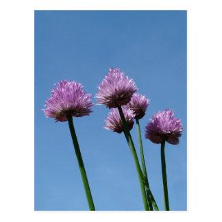庭のハーブの紫色タマネギのアサツキ ポストカード