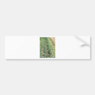 庭の列のニンニクの植物 バンパーステッカー