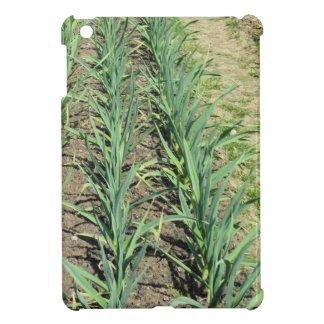 庭の列のニンニクの植物 iPad MINIカバー
