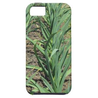 庭の列のニンニクの植物 iPhone SE/5/5s ケース