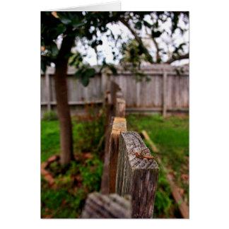 庭の塀 カード