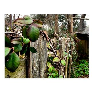 庭の塀 ポストカード