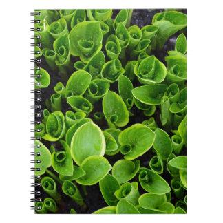 庭の新しい緑のhostAの植物 ノートブック