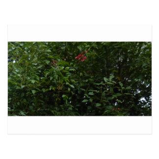 庭の木の許可 ポストカード
