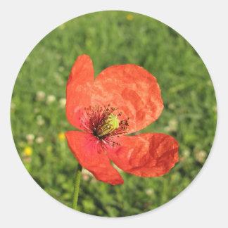 庭の独身ので赤いケシ ラウンドシール