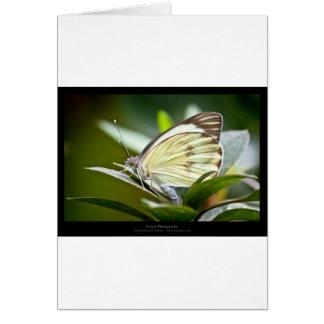 庭の生き物- Buterfly カード