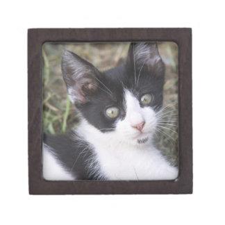 庭の白黒猫の子ネコ ギフトボックス
