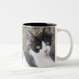 庭の白黒猫の子ネコ ツートーンマグカップ