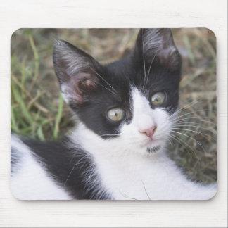 庭の白黒猫の子ネコ マウスパッド