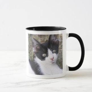 庭の白黒猫の子ネコ マグカップ
