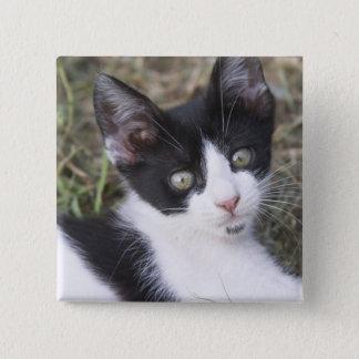 庭の白黒猫の子ネコ 缶バッジ