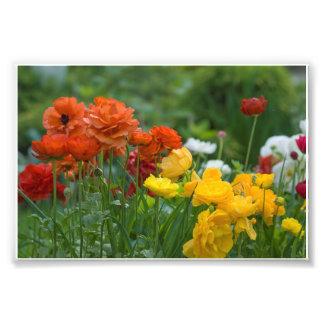 庭の花 フォトプリント