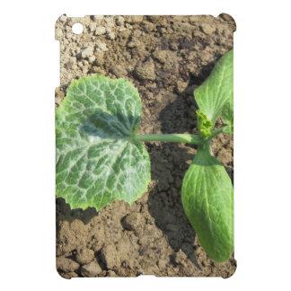 庭の若いきゅうりの植物のクローズアップ iPad MINI CASE