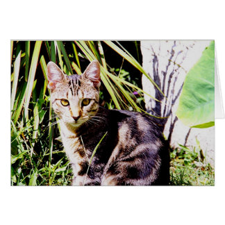 庭の虎猫猫 カード