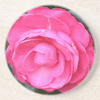 庭の開花の暗いピンクのツバキの花 コースター