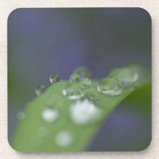 庭の雨滴 コースター