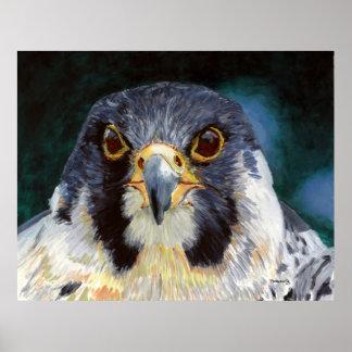 強度- 《鳥》ハヤブサの熟視 ポスター